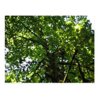 Árvore Cartão Postal