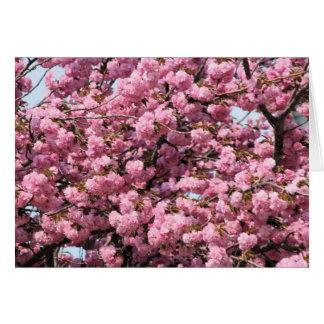 árvore cor-de-rosa cartões