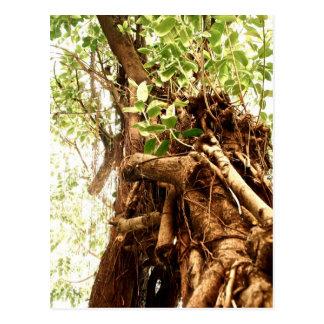 Árvore da harmonia cartão postal