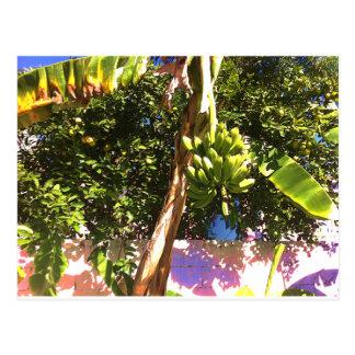 Árvore de banana cartão postal
