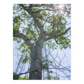 Árvore de bordo cartão postal