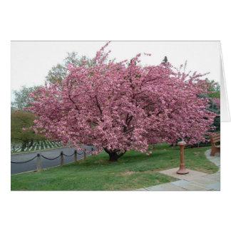 Árvore de cereja cartões