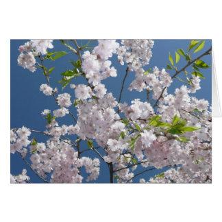Árvore de florescência cartões
