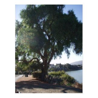 Árvore de máscara cartoes postais
