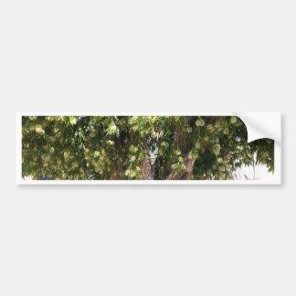Árvore de Paperbark Adesivo Para Carro
