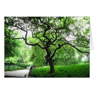 Árvore do Central Park Cartão De Nota