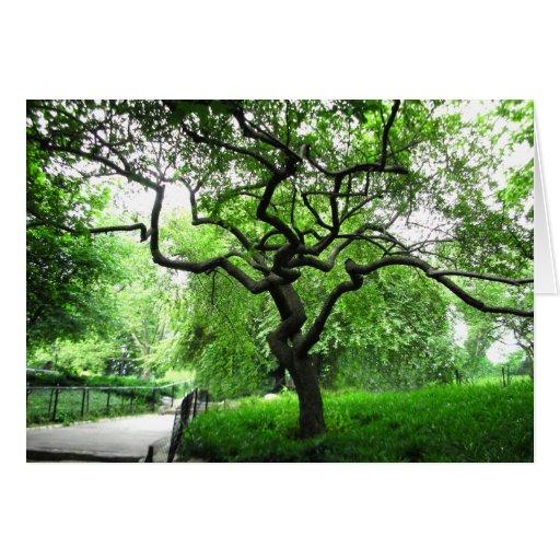 Árvore do Central Park Cartões