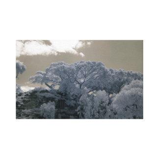 Árvore do Ficus em África/fotografia infravermelha Impressão Em Canvas