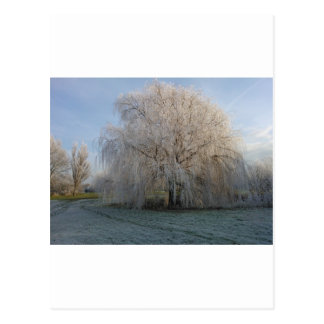 Árvore do inverno cartão postal