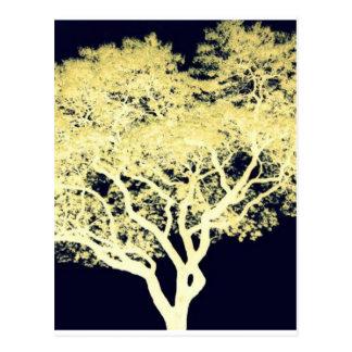 Árvore do Jacaranda Cartao Postal