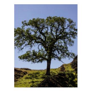Árvore do montanhês cartão postal