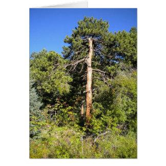 Árvore em Colorado Cartão