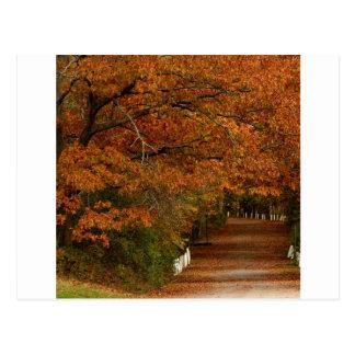 Árvore o acordar de Fall.jpg Cartão Postal
