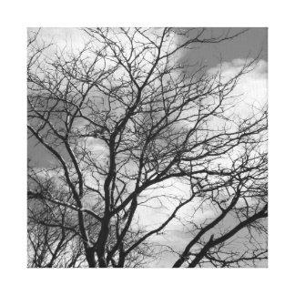 Árvore preto e branco - canvas quadradas #1 da impressão em tela
