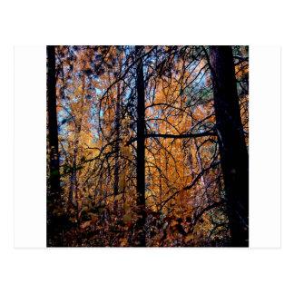 Árvore profundamente na queda cartão postal