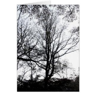 Árvore quase estéril atrasada B&W do outono do Cen Cartão