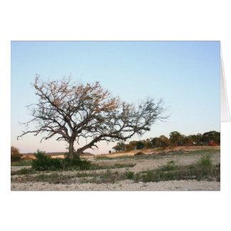 Árvore só cartão