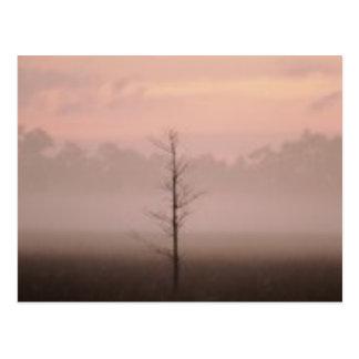 Árvore só cartões postais