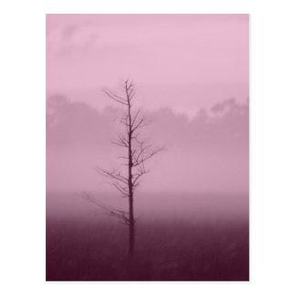 Árvore só cartao postal