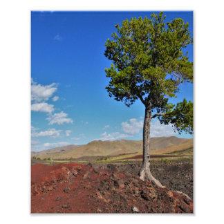 Árvore só impressão de foto