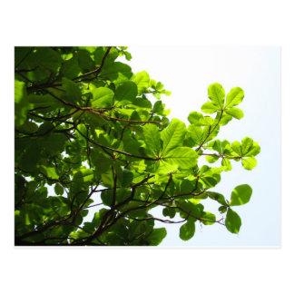 Árvore verde cartão postal