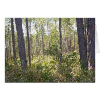 Árvores 000_2424 que exultam cartão de nota