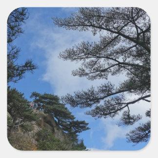 árvores adesivo quadrado