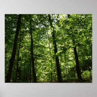 Árvores altas na natureza pôster