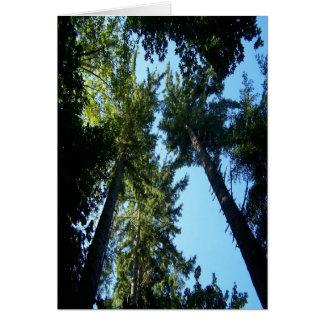 árvores cartoes