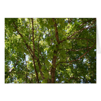 Árvores Cartões