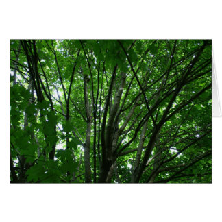 Árvores Cartão Comemorativo