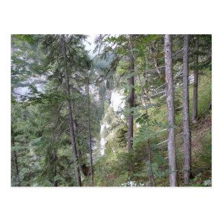 Árvores Cartão Postal