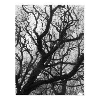 Árvores Cartao Postal