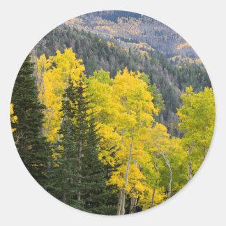 Árvores de Aspen (Populus Tremuloides) e coníferas Adesivo Redondo