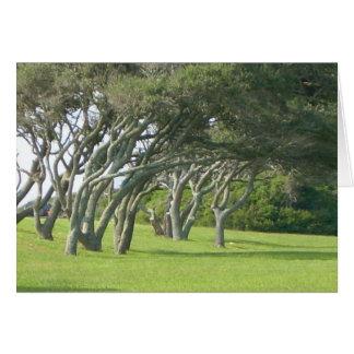 Árvores de Live Oak Cartão