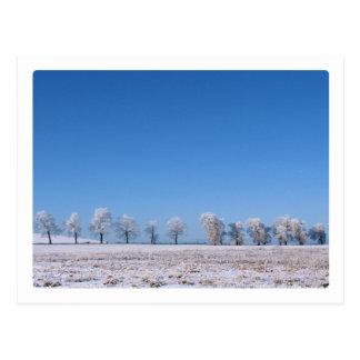 Árvores do inverno cartão postal