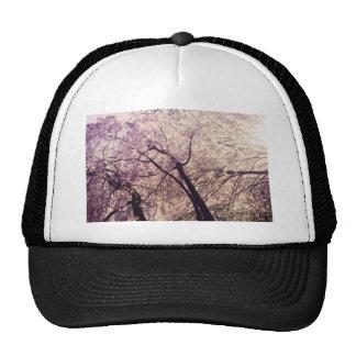 Árvores do primavera do Central Park Bone