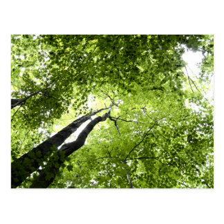 Árvores e folhas cartão postal