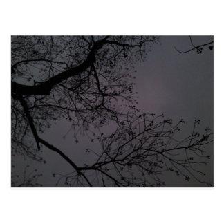 Árvores escuras cartão postal