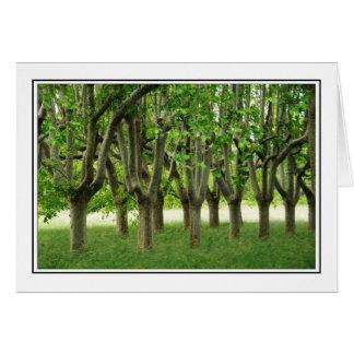 Árvores planas cartão