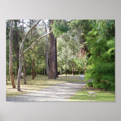 As madeiras dos jardins botânicos de Dunedin Posters