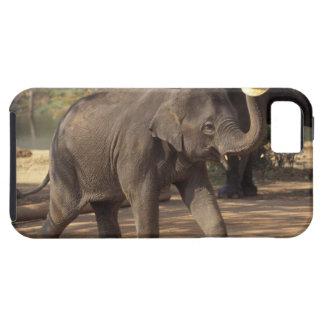 Ásia, Tailândia, curvatura de Lampang com o chapéu Capas iPhone 5 Case-Mate
