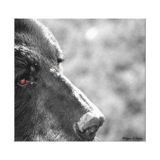 Através de umas canvas dos olhos de urso preto impressão em tela