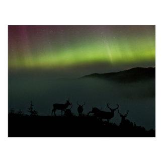 Aurora boreal com cartão dos veados