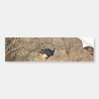 Autocolante no vidro traseiro da avestruz, coleção adesivo para carro