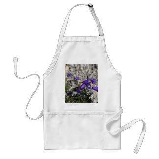 Avental Bellflower de Earleaf (cochleariifolia do