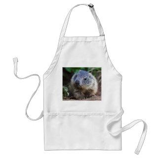 Avental curioso da marmota do bebê
