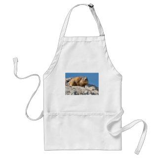 Avental Marmota alpina na rocha