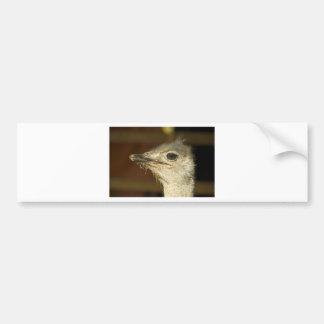 avestruz adesivo para carro