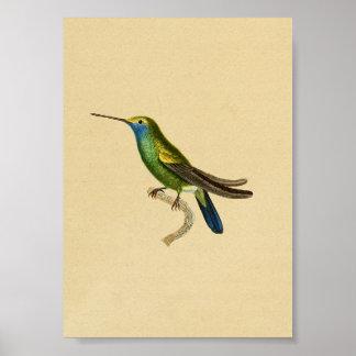 Azul 1830 do amarelo do impressão do colibri do